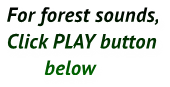 For forest sounds, Click PLAY button        below